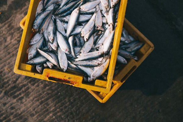 balık zehirlenmesi belirtileri