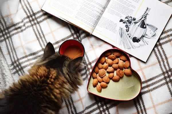 Kediler Ne Yer? Patili Dostunuzun Bayılarak Yiyeceği 7 Besin Tarifi