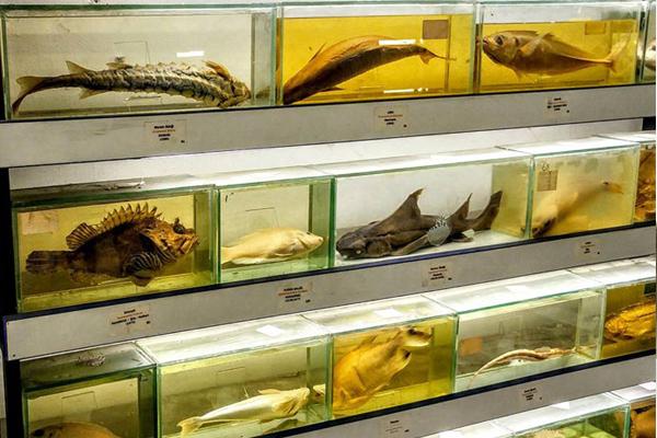 samatya balık müzesi
