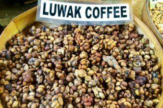 Dünyanın En Pahalı Kahvesi Kopi Luwak 5 Akılalmaz Özelliği Tarifi