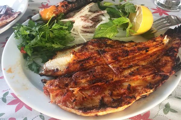 şabut balığı