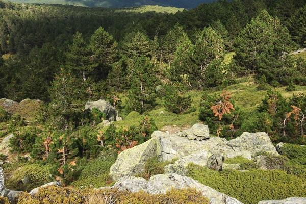 kaz dağları milli parkı kamp alanı