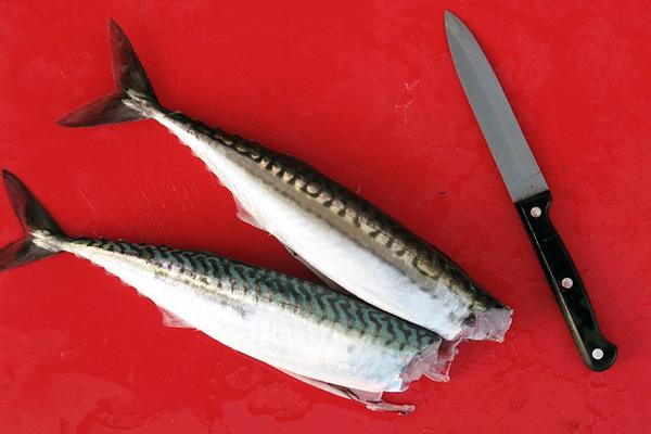 kefal balıkları