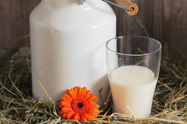pastörize süt nedir