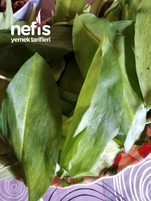 Dağı sarımsağı pestosu ( sos)