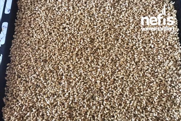 buğday çimlendirme