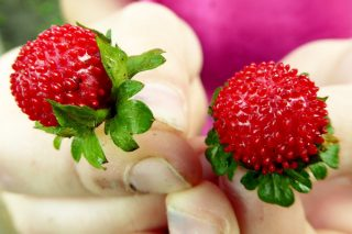Süper Antioksidan Dağ Çileğinin 5 Faydası Tarifi