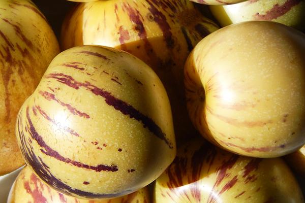pepino faydaları