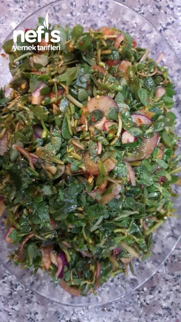 Omega Deposu Semizotu Salatası