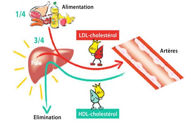 hdl kolesterol yüksekliği