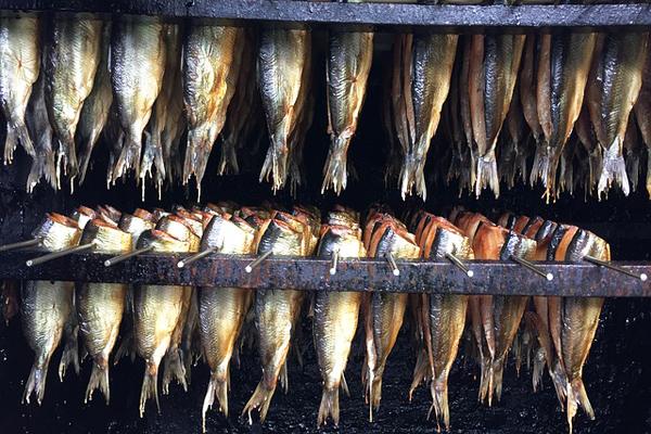 ringa balığı nerede satılır