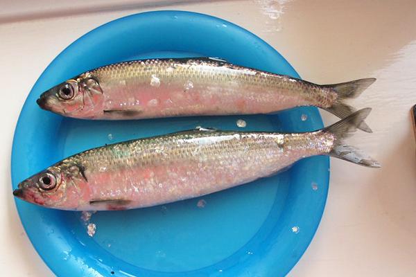 ringa balığı nasıl pişirilir