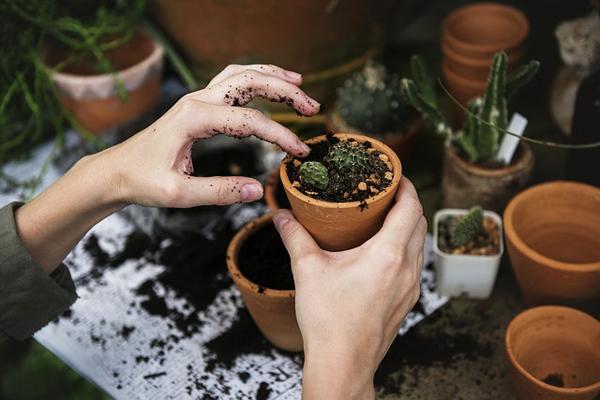 yumurta kabuğu bitkilere faydaları