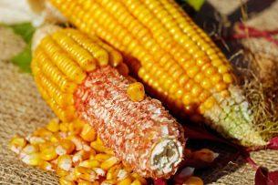 mısır nasıl ayıklanır