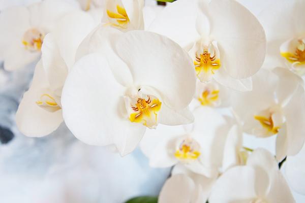 orkide bakımı nefis yemek tarifleri