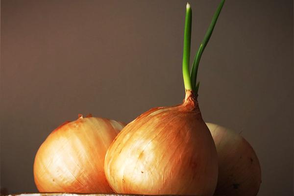 kuru soğan nasıl yetiştirilir