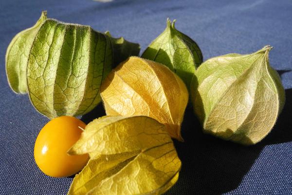 altı çilek meyvesi