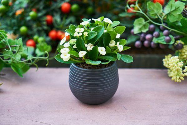 Evde Bitkiler İçin 8 Pratik Doğal Gübre Yapımı Tarifi