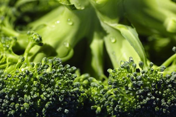brokoli kürü saraçoğlu