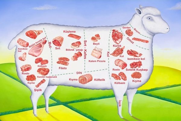 Koyun Etinin Bölümleri: Tariflerle Resimli Anlatım Tarifi
