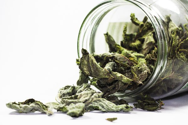 yeşil çay kalori