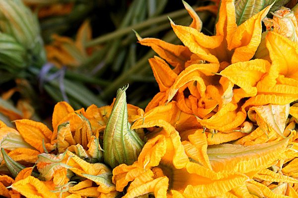 Kabak Çiçeğinin Sizi Şaşırtacak 11 Faydası Tarifi