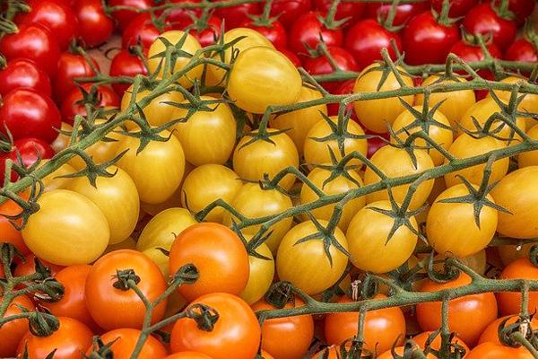 sarı domates faydaları