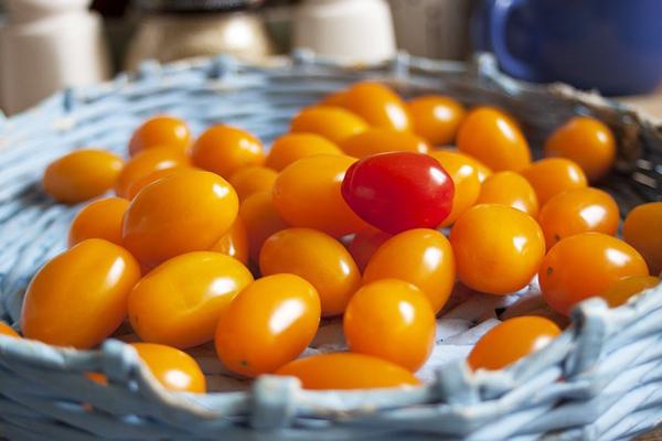 sarı domates fiyatı