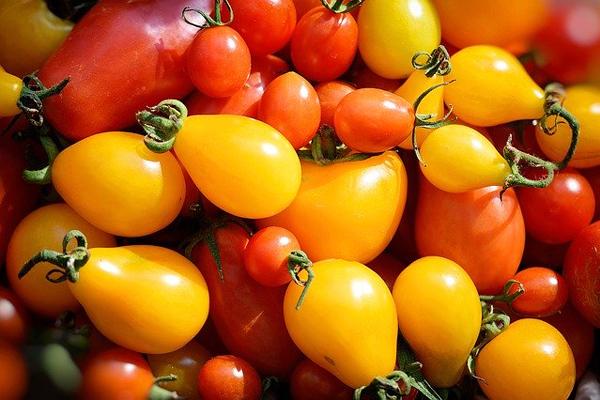 sarı ampul domates