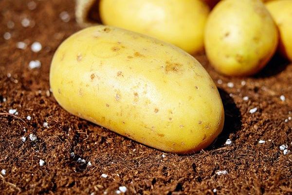 sarı bamba patates