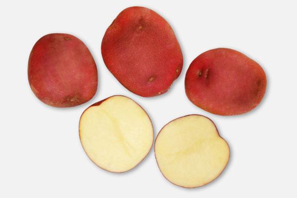 lady rosetta patates