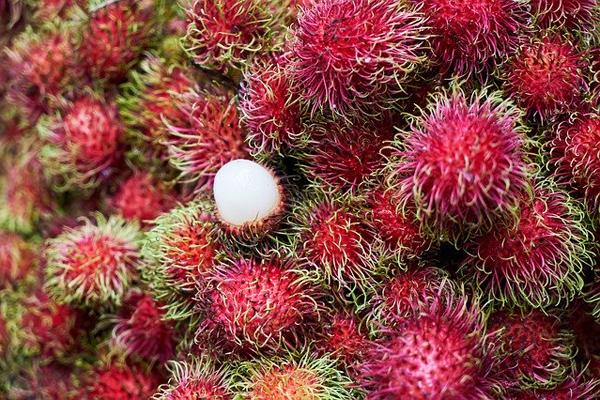 rambutan meyvesinin fiyatı
