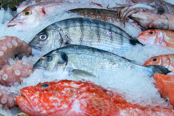 taze balık nasıl olur
