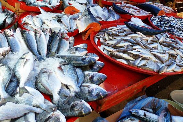 Taze Balık Nasıl Anlaşılır? En Kolay 8 Yöntem Tarifi