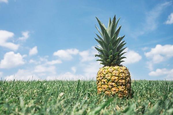 ananas nasıl ekilir