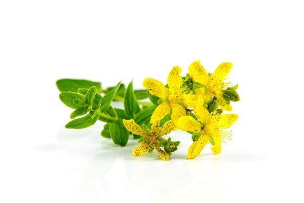 sarı kantaron yağı ne işe yarar