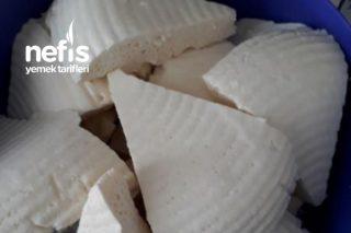 Evde Organik Peynir Yapımı Tarifi