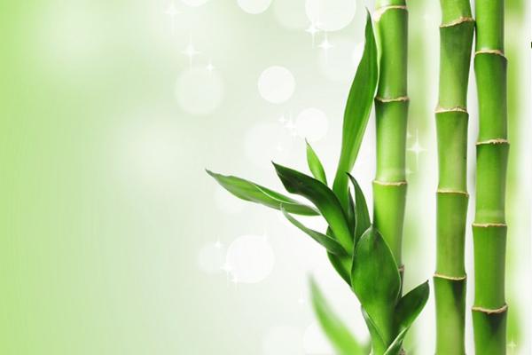 bambu bakımı