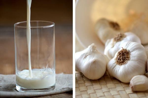 Sarımsaklı Sütün Faydaları: Doğal Antibiyotik Tarifi