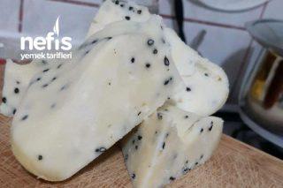 Evde Kesilen Sütten Peynir Tarifi