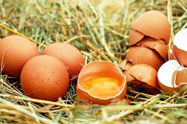 yumurta beyazı faydaları