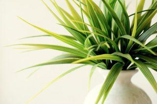 Salon Bitkileri: Dekoratif, Bakımı Kolay 7 Çeşit Tarifi