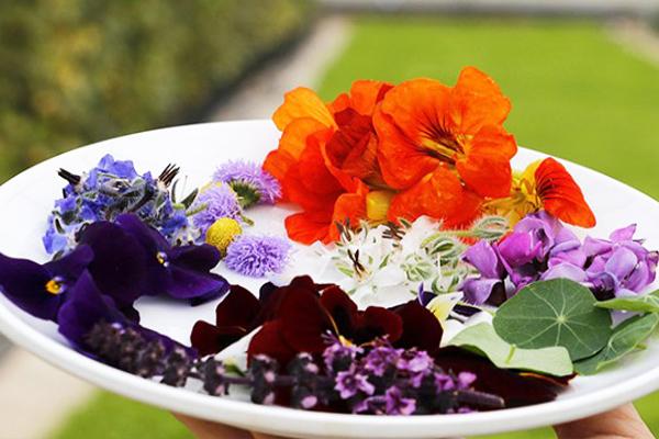 yenilebilir çiçek gastronomi
