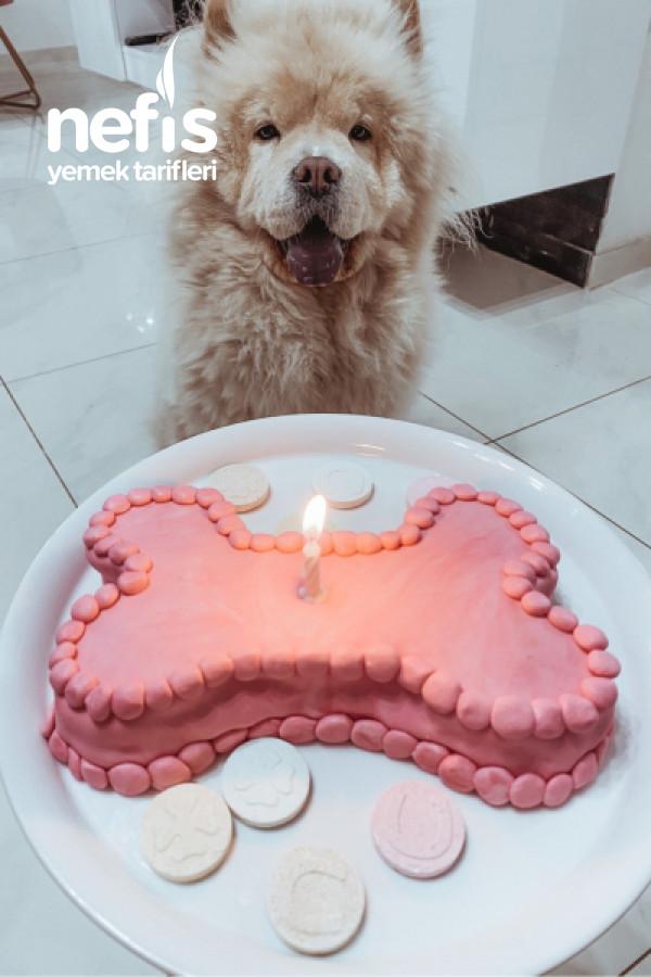 Muhteşem Kolay Pratik Pasta (Köpeğim 1 Yaşında)