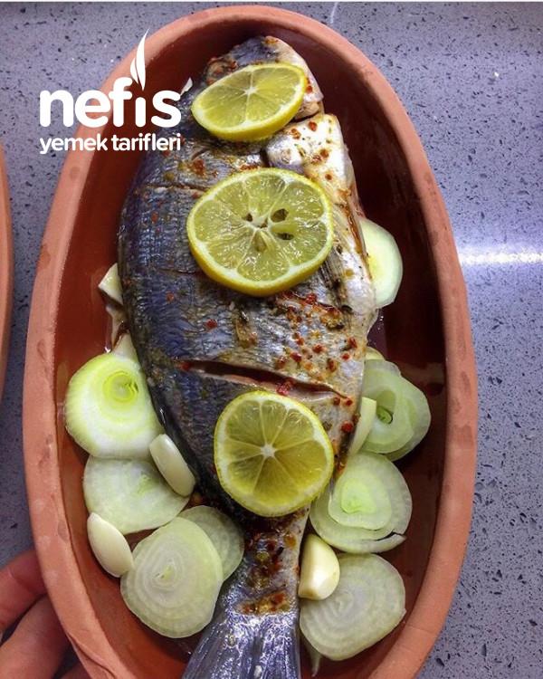 Balık Çipura