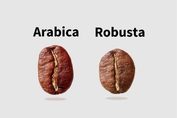 kahve çekirdeği çeşitleri