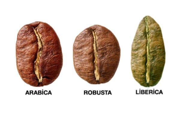 nitelikli kahve çekirdeği