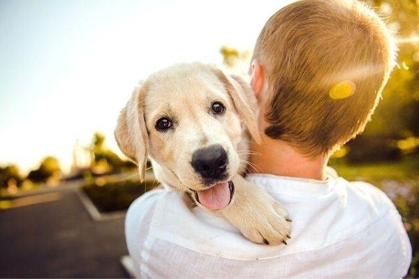 köpekler mama harici ne yer