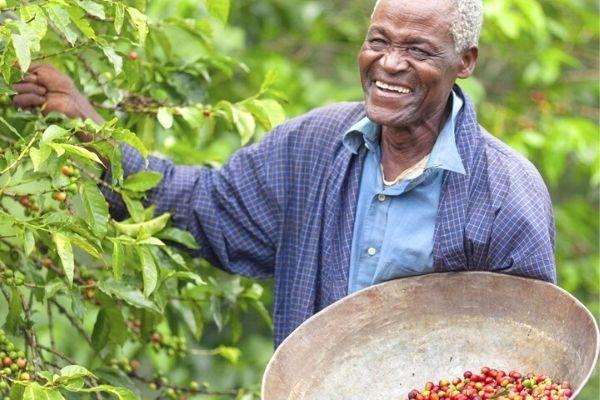 afrika kahvesi
