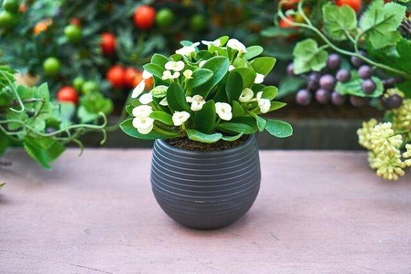 Evde 9 Doğal Çiçek Coşturan Yapımı Tarifi